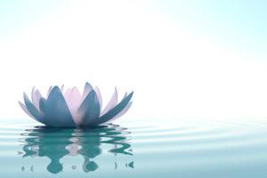 lotus_sml2